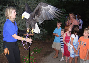 A Birds of Prey expert shows a bald eagle to children at Perry & Co.'s Client Appreciation event.